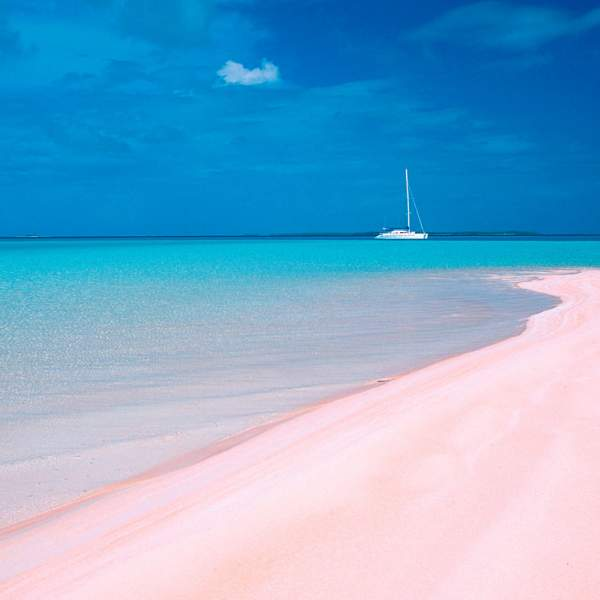 Enjoy Pink Sand beach