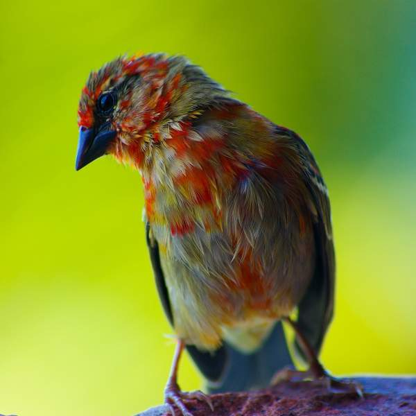 Discover colourful bird species